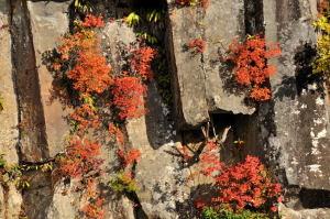 玄武岩と紅葉