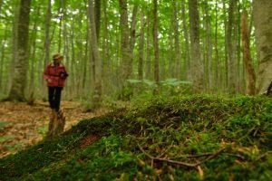 苔が、綺麗な森
