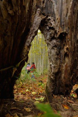 森の住人からの視線