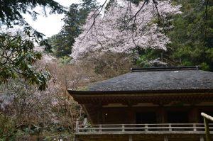 室生寺の本堂