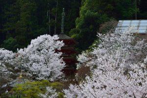 長谷寺の五重塔