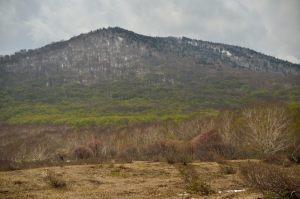 ブナ林地帯が芽吹き